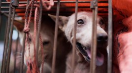 Campaigners call for South Korea to stop serving dog meat ahead of the Winter Olympics