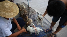 Chinese public urges government to crack down on dog meat industry