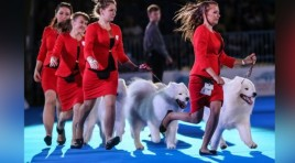 "Solemn Declaration  Support Shanghai as the host city for the ""2019 World Dog Show"""