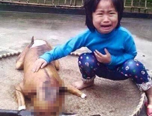 越南人疯吃狗肉 80%民众喜好这一味