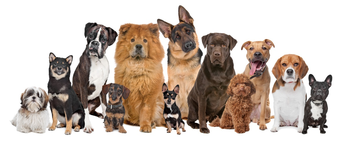 Can You Name All Of The 344 Dog Breeds In The World World Dog Alliance