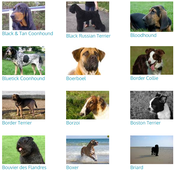 Can You Name All Of The 344 Dog Breeds