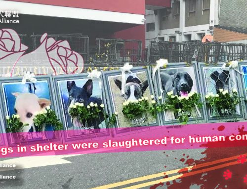 20 dogs in shelter slaughtered for human consumption
