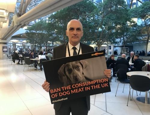 工黨議員支持英國立法禁食狗肉