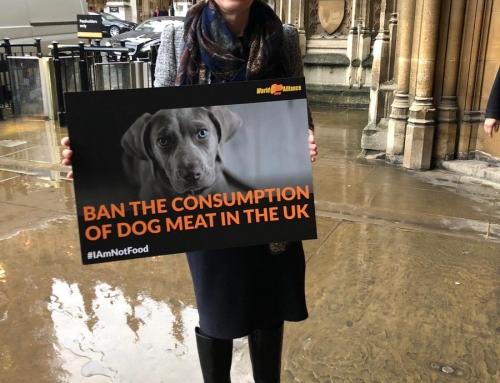 獨立議員支持英國立法禁食狗肉