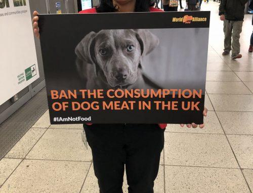 工党议员支持英国立法禁食狗肉