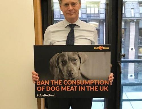 保守党议員支持英国禁食狗肉