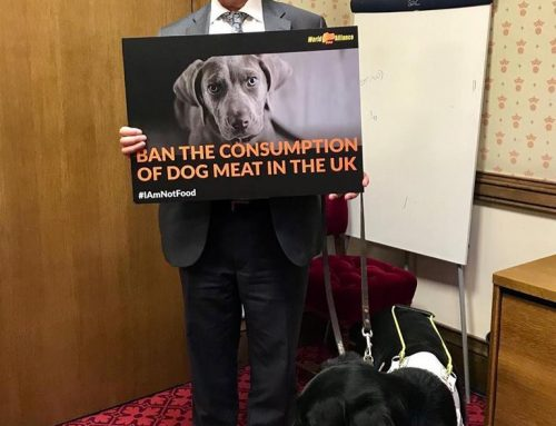 Former Home Secretary supports a dog meat ban in UK