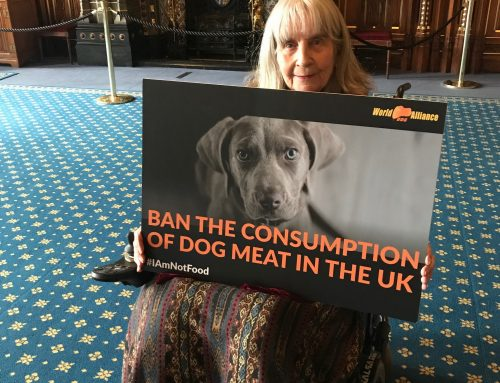 Crossbench Peer supports a dog meat ban in UK!
