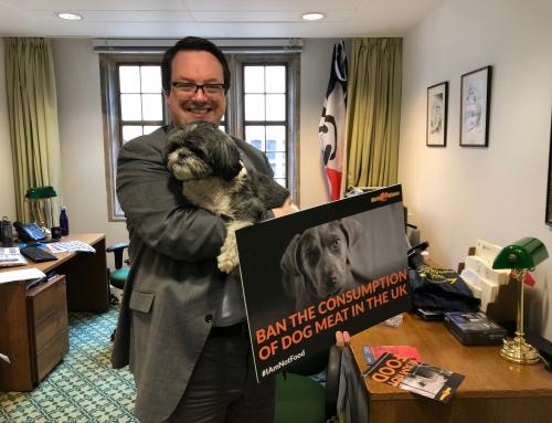 保守党议员支持英国禁食狗肉