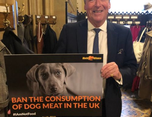 Conservative Peer supports a dog meat ban in UK!